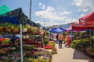 fleurs - vieux bazar - Skopje
