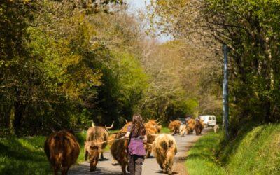 Le ranch de Kerbongout : un exemple d'élevage hors du commun