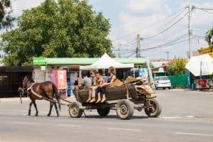 Roumanie, chevaux, charette
