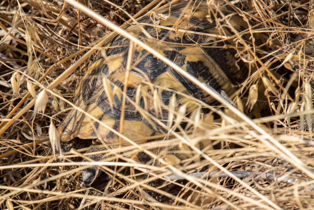 Tortue camouflage