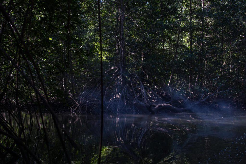racines mangroves - Golfe de Chiriqui
