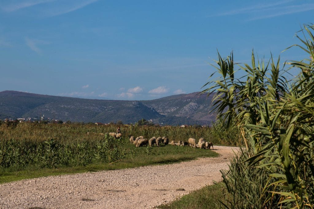 Croatie - chemins