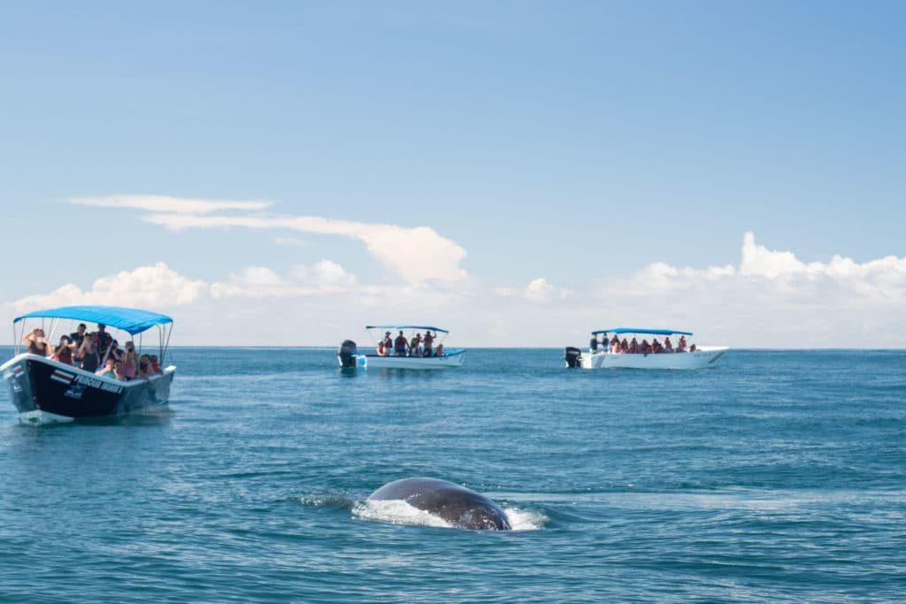 Baleine - Parc National Marino Ballena