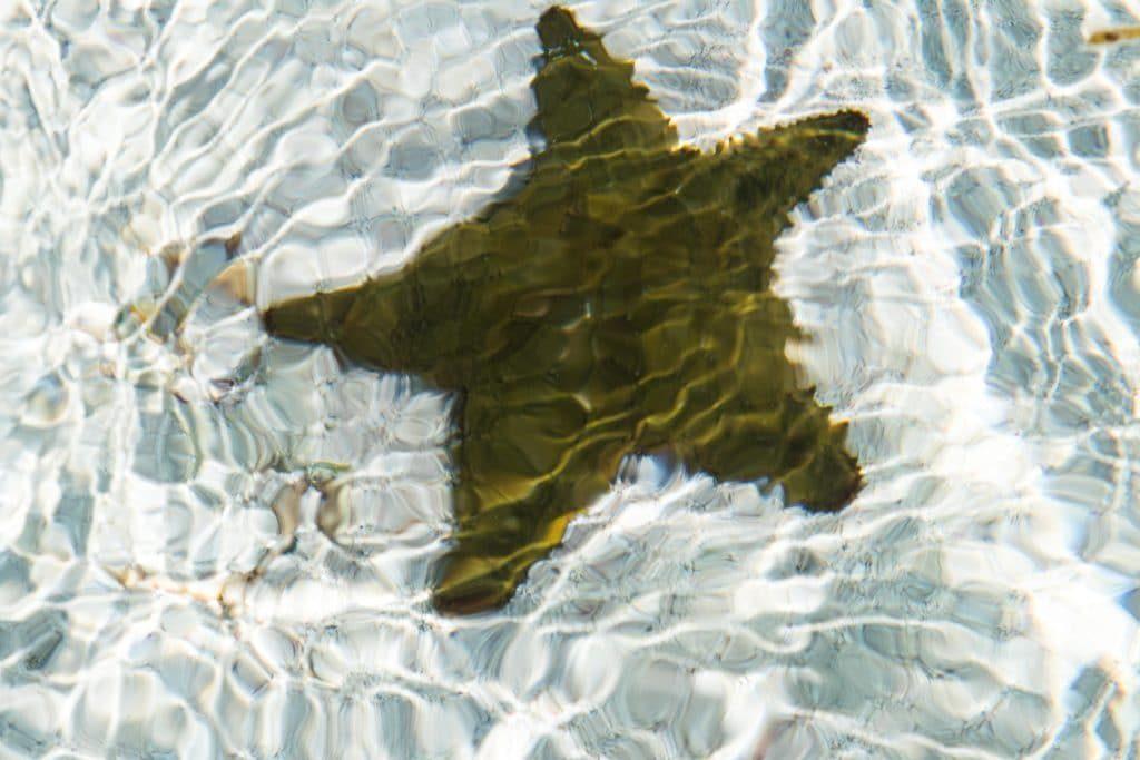 étoile de mer, las san blas