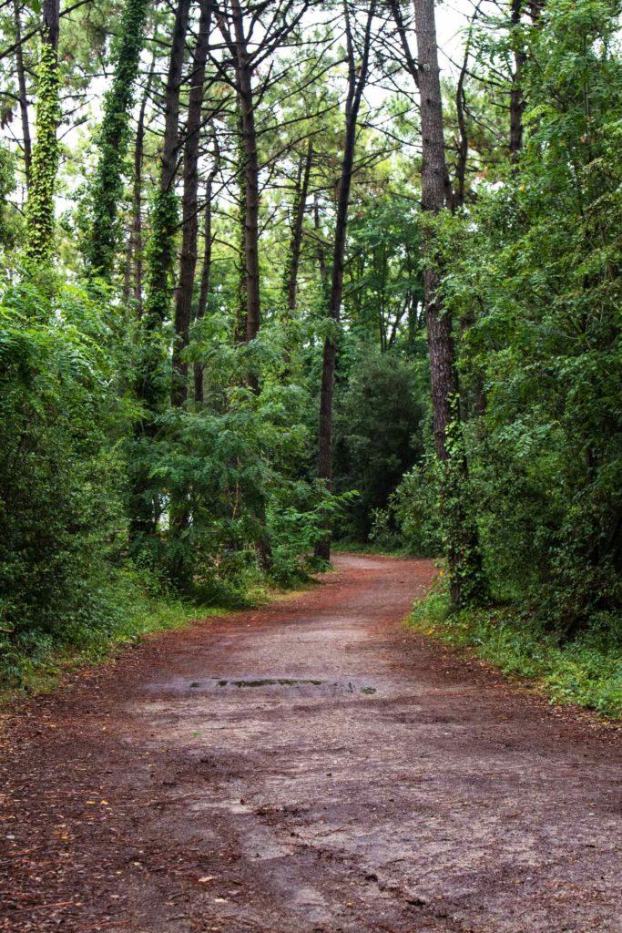Piste cyclable forêt - Vendée