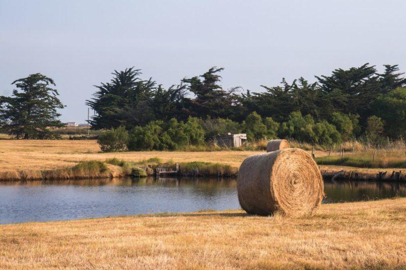 Marais salants - Vendée