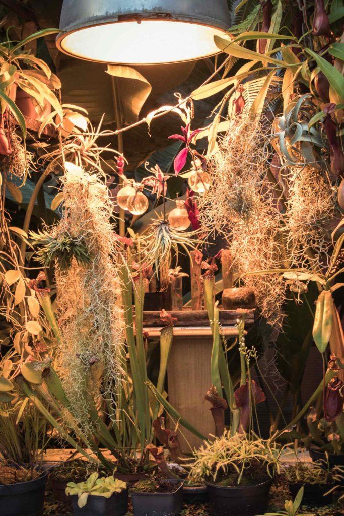 plantescarnivores - machines de l'iile