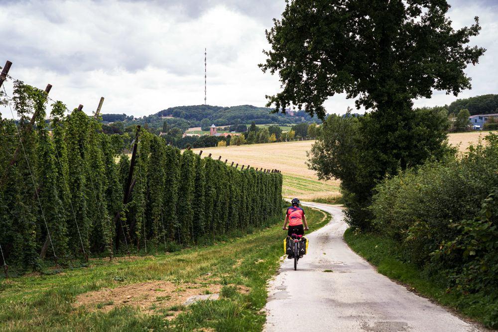 Houblon - Nord à vélo - réseau points noeuds