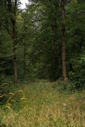 Forêt Nieppe
