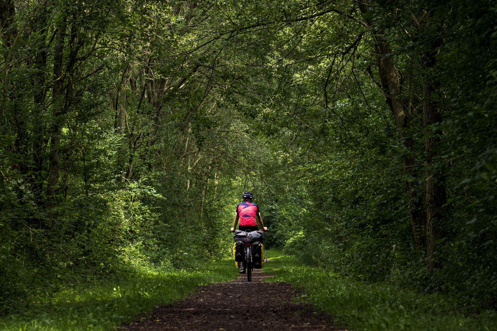 La voie verte de l'Avesnois : un océan de verdure sur l'EuroVelo 3