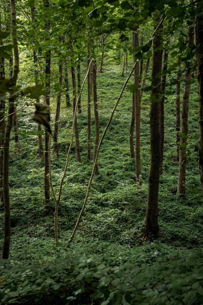 voie verte de l'Avesnois