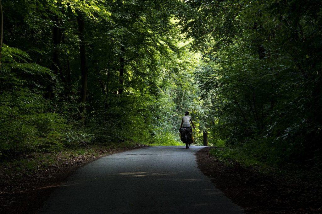 Forêt d'Ermonville