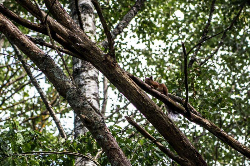 écureuil Oslo