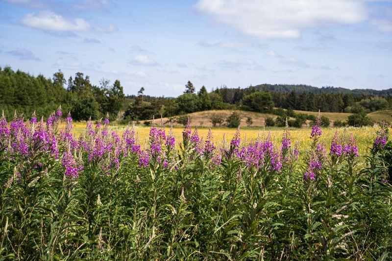 paysages fleuris - Danemark à vélo