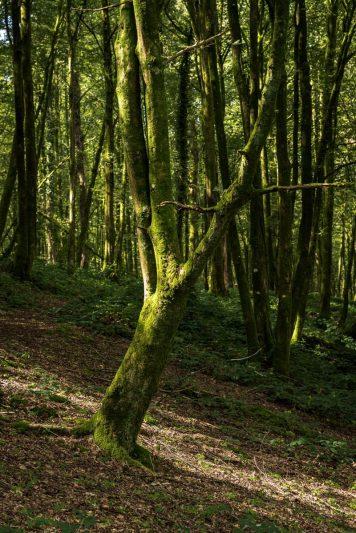 Forêt - Aisne