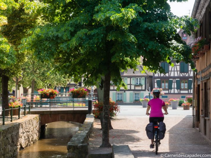 scherwillr velo - la véloroute des Vins d'Alsace