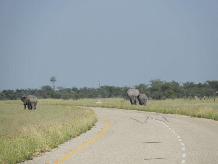 Elephant Highway à Vélo - Botswana