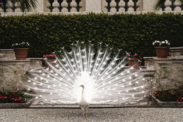 Jardin palazzo Borromeo - Isola Bella