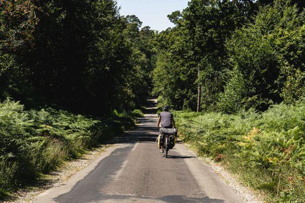 Forêt des andaines - Véloscénie