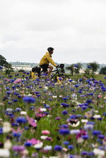 Véloscénie fleurie