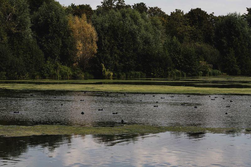 L'étang de haut, riche en oiseaux et grenouille. La V30