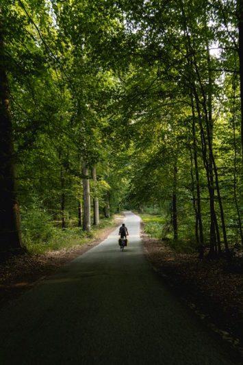 Foret d'Halatte - Oise- Avenue Verte